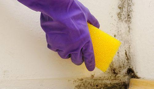 Чем убрать плесень в ванной